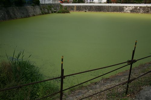 真緑の池発見 003_R.jpg