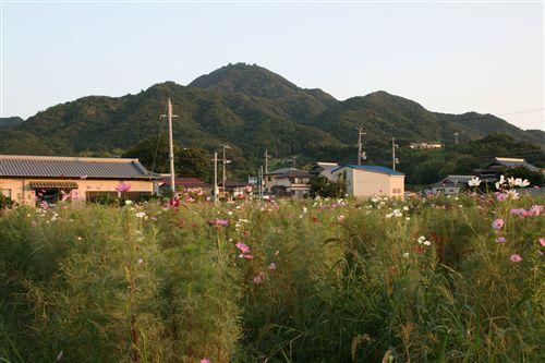 先山&コスモス 011_R.jpg