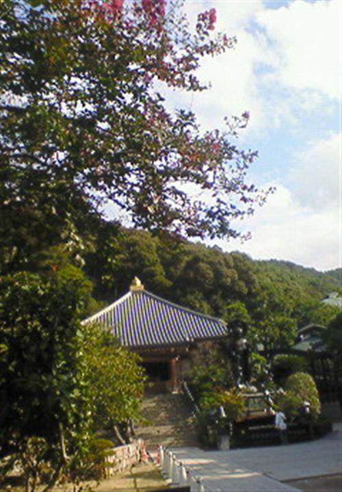 清荒神サルスベリ_R.jpg