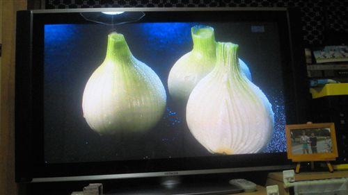 20110516タマネギTV (1)_R.jpg