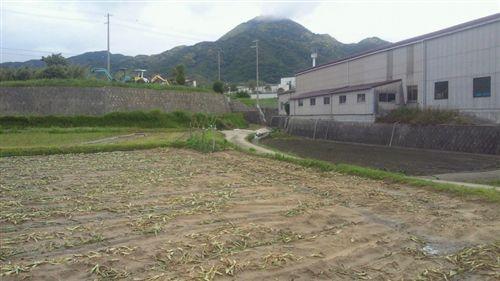 20110531先山頭隠し_R.jpg
