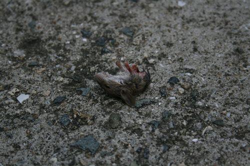 ネズミ 005_R.jpg