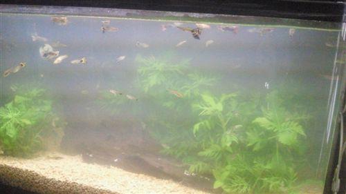 20110608電工熱帯魚_R.jpg