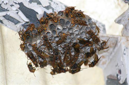 蜂の巣_R.jpg