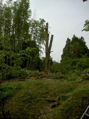 伐木完了_R.JPG