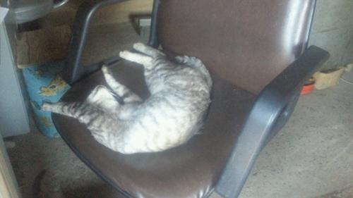 らく猫 (2)_R.jpg