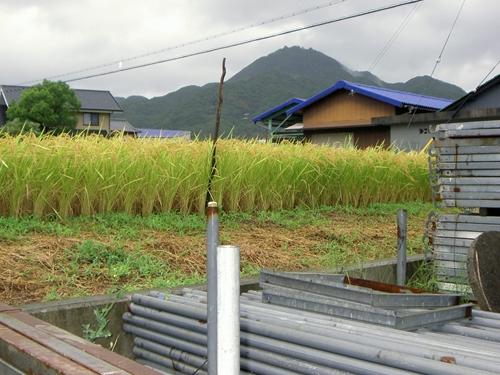 雨の先山_R.JPG