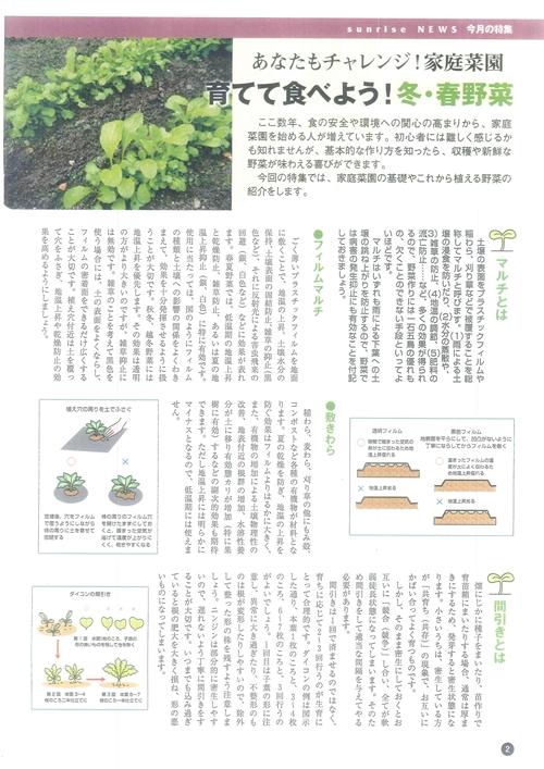 サンライズ家庭菜園記事_R.jpg