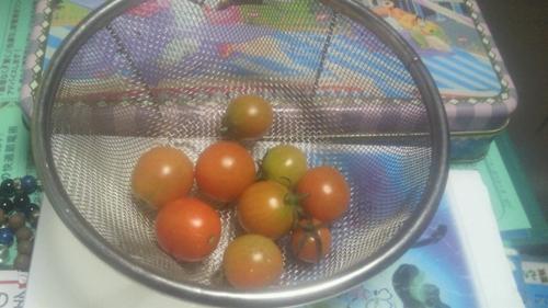 201210ガンバル トマト達_R.jpg