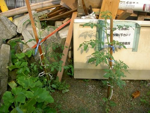 廃棄物野菜達_R.JPG