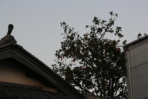 柿&屋根.JPG