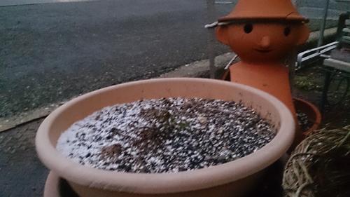 鉢植初雪_R.jpg
