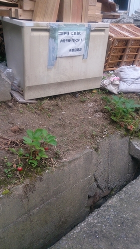 廃棄物イチゴ_R.jpg