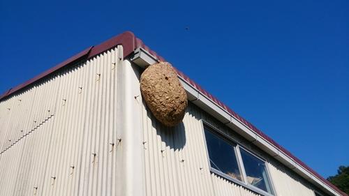 蜂の巣発見_R.jpg