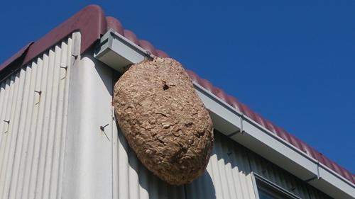蜂の巣大_R.jpg