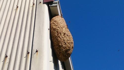 蜂の巣横_R.jpg