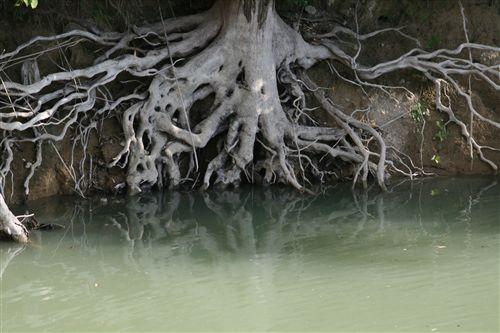 10月上堺池の木根 002_R.jpg