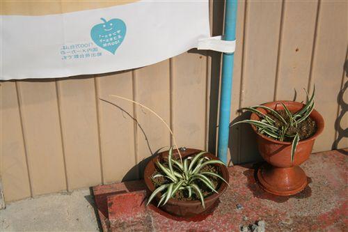 横様より観葉植物フ入り 001_R.jpg