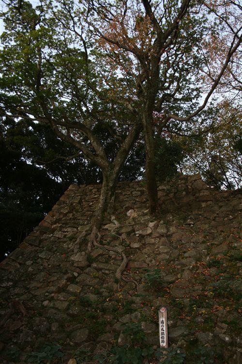 三熊城南之丸の木_R.jpg