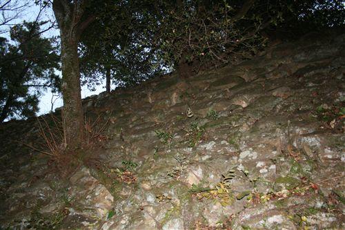 三熊城石垣の木 001_R.jpg