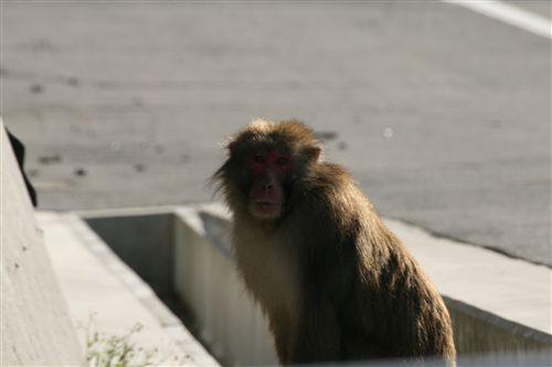 灘の猿 1匹_R.jpg