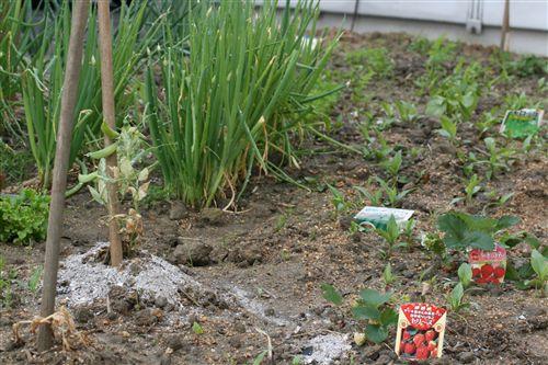4月野菜達 002_R.jpg